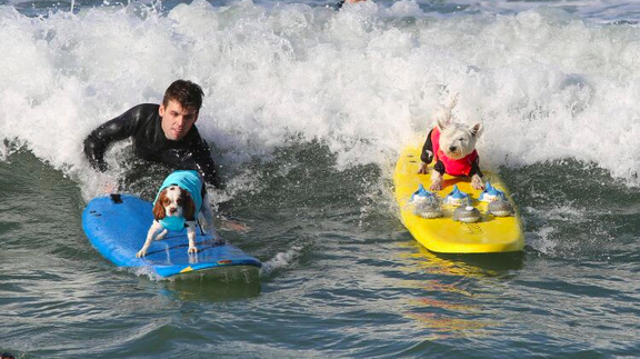 The 7th annual Surf City, Surf Dog competition is happening this weekend.