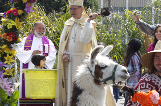 Cardinal Roger Mahony finishes blessing a llama at the 2010 Blessing of the Animals.