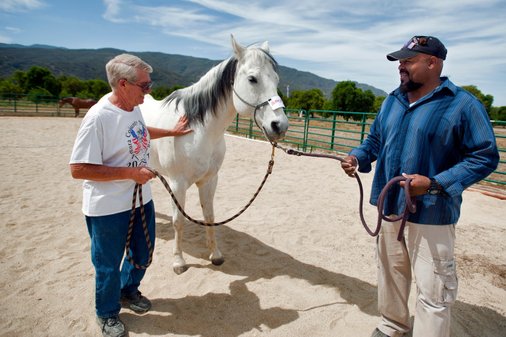 Vietnam veteran Dan Riley of Meiners Oaks holds a horse named Chrome in an Ojai orange field. Riley is taking part in a therapy session with H.O.P.E for Warriors, which stands for Human Opportunity Partnering with Equines. The organization provides equine therapy for those suffering with post-traumatic stress disorder.