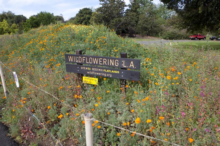 Fritz Haeg, Wildflowering L.A., 2013-2014. A LAND (Los Angeles Nomadic Division) Exhibition. Image courtesy of Isabel Avila.
