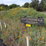 L.A. Arboretum, Site #22