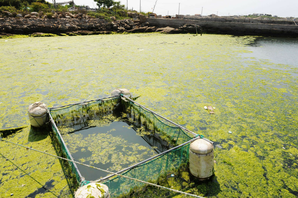 Some sustainable food industry experts predict algae farming could become the world's biggest cropping industry in the future.