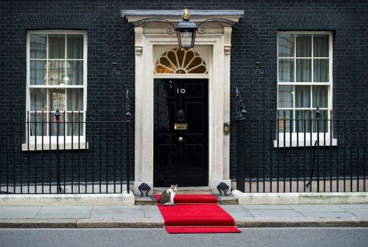 Larry the Downing Street cat sits on the