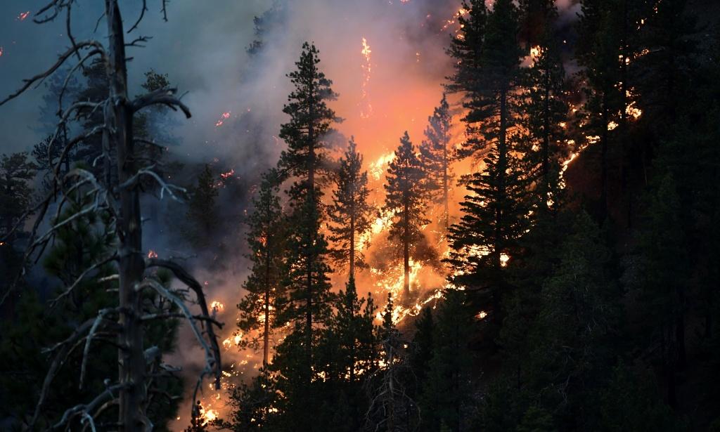 The Bobcat Fire burns pine trees near Cedar Springs, Los Angeles, California.