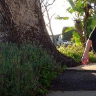Tina Segler's sidewalk