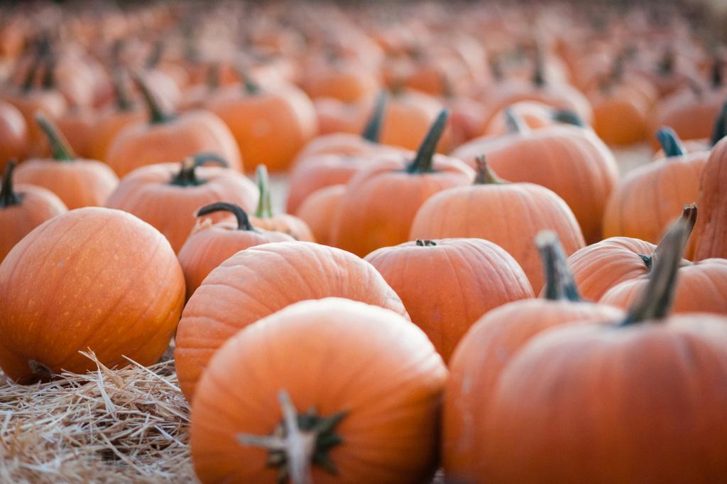 Pick out a pumpkin to take home at this annual family-friendly fall festival in Pasadena.