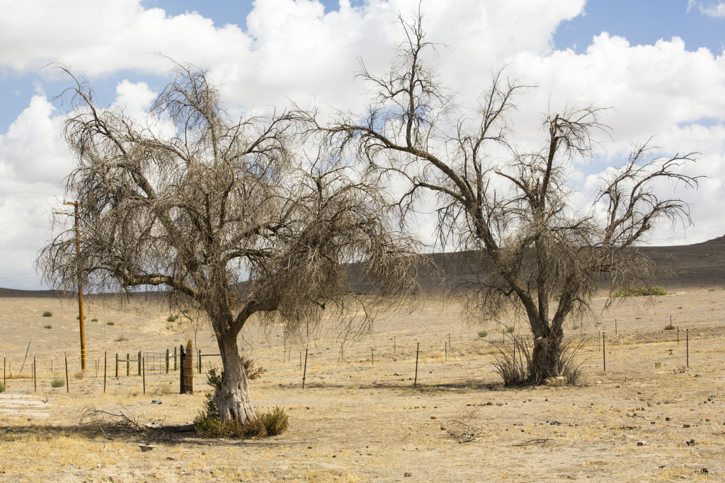 Audio: To Predict Effects Of Global Warming, Scientists