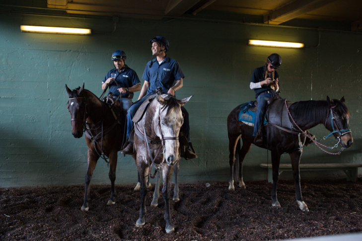Horses rest before a race at the Santa Anita Track on December 26th, 2013.