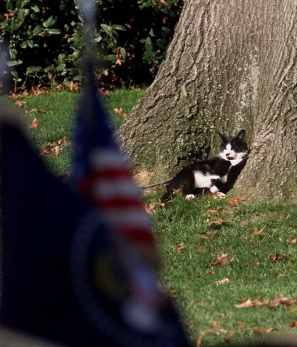 Socks, US President Bill Clinton's pet cat