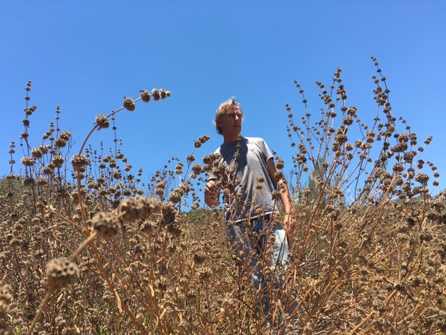 Rick Halsey researches the benefits of chaparral ecosystems and the threats facing these plant communities.