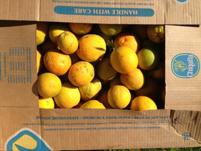 A box of Valencia oranges destined for MENDpoverty.org.