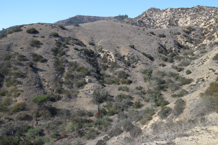 Dried grasses cover most of the hills in Griffith Park on February 5, 2014