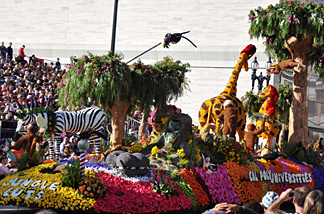 "Cal Poly Universities float, ""Jungle Cuts"" as it rolls down Colorado Boulevard. For the second straight year, Cal Poly won the Viewers' Choice Award for this year's Tournament of Roses Parade."