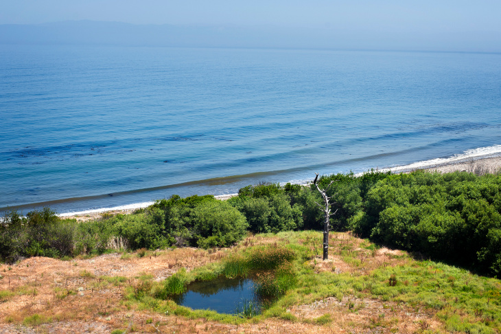 Santa Cruz Island Fox Recovery - 10