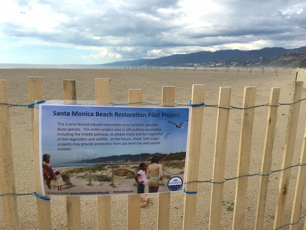 Grooming and raking are not allowed in the 2-acre plot, which The Bay Foundation hopes will eventually contain 3- to 4-foot high dunes.