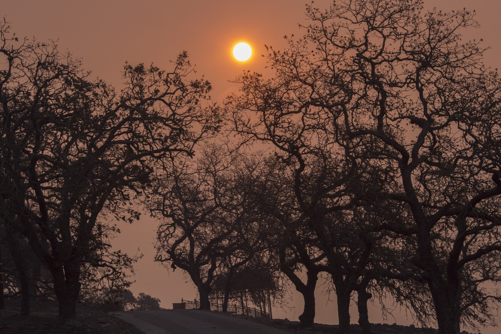 NAPA, CA - OCTOBER 11: The sun shines behind a smoky sky and scorched trees at the family-owned winery, Signorello Estate, on Napa's Silverado Trail, which was destroyed by the Atlas Fire, on October 11, 2017 near Napa, California. In one of the worst wildfires in state history, more than 2,000 homes have burned and at least 17 people have been killed as more than 14 wildfires continue to spread with little containment in eight Northern California counties.   (Photo by David McNew/Getty Images)