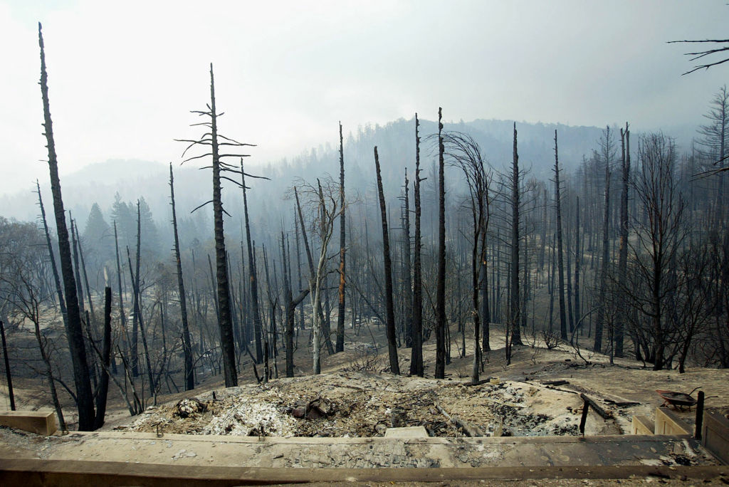 This Oct. 30, 2003 file photo shows a view from a burned out home showing a pine tree forest and homes which were consumed by the Old Fire as it roared through the community of Cedar Glen in Lake Arrowhead, Calif.