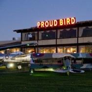 Proud Bird