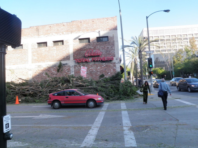 Downed trees line Green St in Pasadena