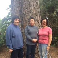 Cindy Yuge, center, stand with her two sisters in front of the torrey pine tree their father planted in the later 1920s.