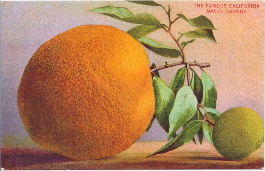 The famous California navel orange, image from The Orange and the Dream of California by David Boulé.