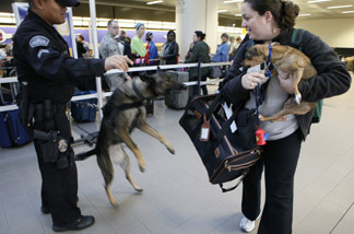 Los Angeles Police K-9 officer E. Ornelas with his Belgium Malinois dog, Kira, orders an unidentified traveler to keep her dog inside his cage at the Los Angeles International Airport, Tuesday, Dec. 21, 2010.