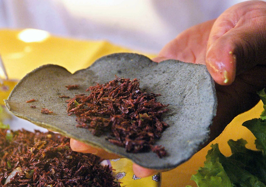 Florentino Azpetia, chef at Girasoles restaurant in Mexico City, prepares a grasshopper taco (taco de chapulines), a typical Mexican delicacy, in the restaurant's kitchen 19 October 2001. Maggots (gusanos del maguey), grasshoppers (chapulines) and white ant eggs (escamoles) form part of a Mexican specialty cuisine which features over 500 edible insects and bugs.