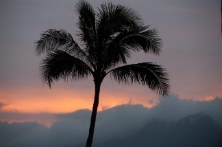 A palm tree is seen during sunset as US President Barack Obama plays golf at the Mid Pacific Country Club in Kailua, Hawaii, December 28, 2010. Obama is the first Hawaiian-born U.S. President.