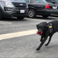 Vapor Wake trained police dog, Nellie.