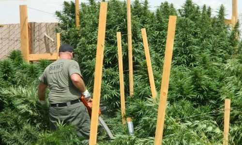 Lake Los Angeles Resident Deputy uncovered a multi-million dollar pot farm in the early morning of Sept 12, 2012.