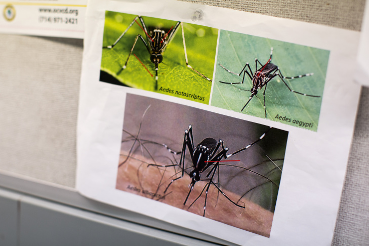 A dead Aedes aegypti mosquito, which transmits Zika virus, sits under a microscope at Orange County Vector Control. Four Aedes aegypti mosquitos have been found in the region this year.