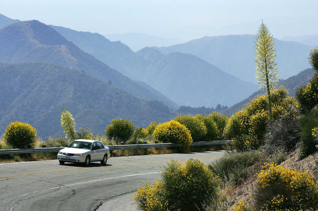 A motorist drives between flowers as a heavy wildflower bloom, the result of last winter's record rainfall, continues on the first day of summer along the Angeles Crest Highway on June 21, 2005.