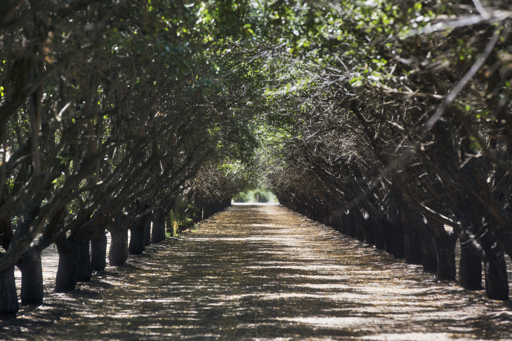 Tom Rogers runs Dan and Tom Rogers Farm with his brother in Madera, Calif. The almond growers' grandparents first bought the property almost a century ago.