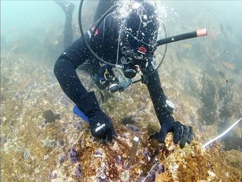 Saving the kelp forests