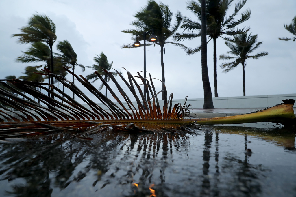 Windblown palm fronds litter the street along Sebastian Street Beach ahead of the arrival of Hurricane Irma on September 9, 2017 in Fort Lauderdale, Florida.