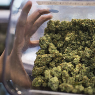 An employee holds one of several strains of medical marijuana sold at a dispensary in downtown Los Angeles on Monday afternoon, Feb. 29, 2016. In November, California voters could decide to make recreational marijuana use legal.
