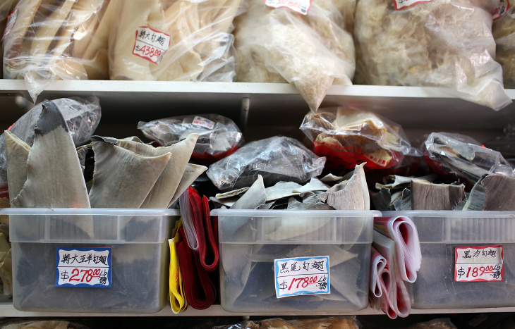 Proposed San Francisco Ban On Sale Of Shark Fins Stirs Protest And Debate