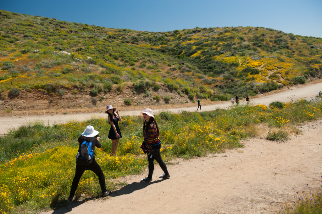 The Metropolitan Water District had to close the wildflower trail at Diamond Valley Lake in Hemet, California for several days to avoid damage to the area after thousands of people came during the superbloom this spring, many of them wandering off trail in pursuit of photographs, selfies, and a more intimate wildflower experience, March 30, 2017.