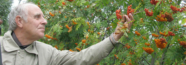 "Leonid Burmistrov, a researcher at the Vavilov Institute of Plant Industry, stands amid orange ""sorbus"" or ""mountain ash."" This fruit and others could be destroyed if the Russian government sells the land in the village of Pavlovsk."