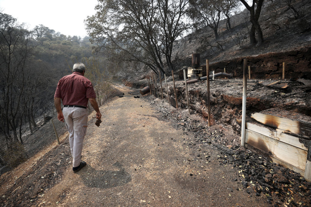 Sid Torun, owner of M.S. Torun Family Vineyards, walks through a portion of his property that was burned by the LNU Lightning Complex fire on August 24, 2020 in Vacaville, California.