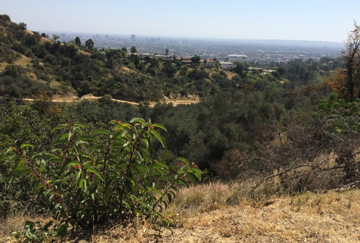 Gina Masequesmay fled Vietnam with her family shortly after the fall of Saigon. She says coming to terms with strong memories of war has taken her years. Today, she finds solace in walks in L.A.'s Griffith Park.