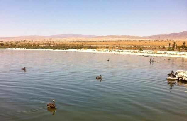 A still day at the Salton Sea. (Sanden Totten/KPCC)