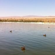 A plan to save the Salton Sea