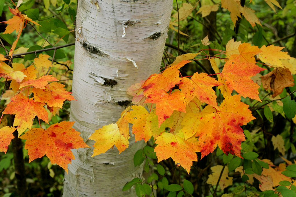 Gorgeous photos of autumn leaves to help you forget fall for When will the leaves start changing 2017