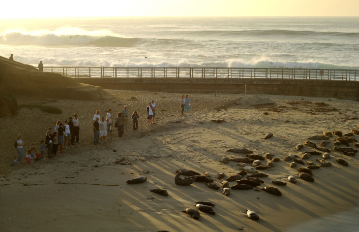 Seals Occupy La Jolla's Children's Pool Beach