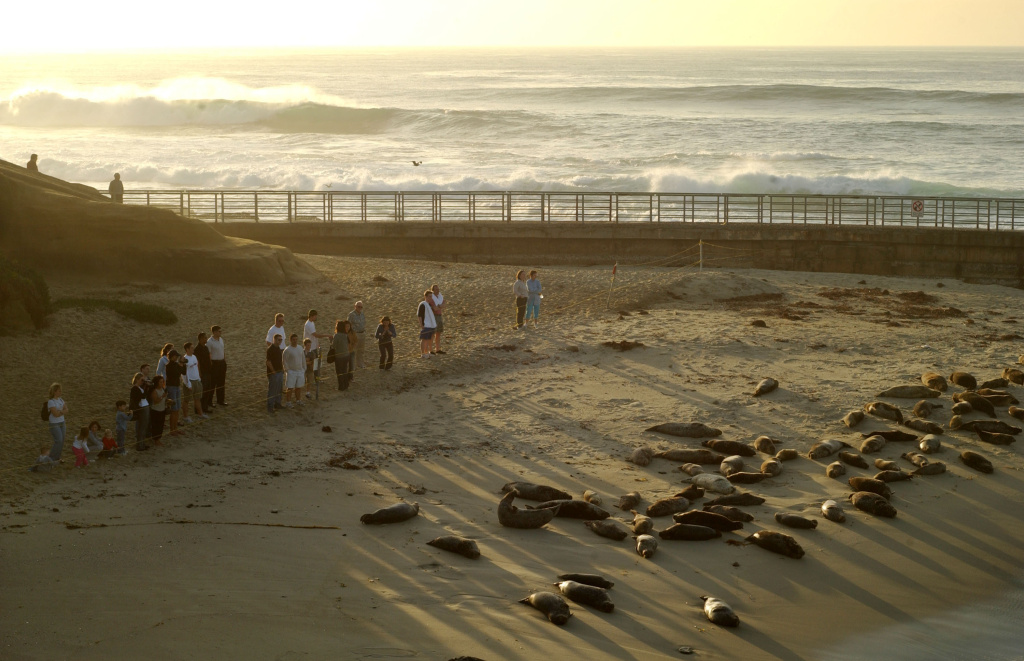Spectators watch slumbering harbor seals from behind a rope barrier at Children's Pool Beach.