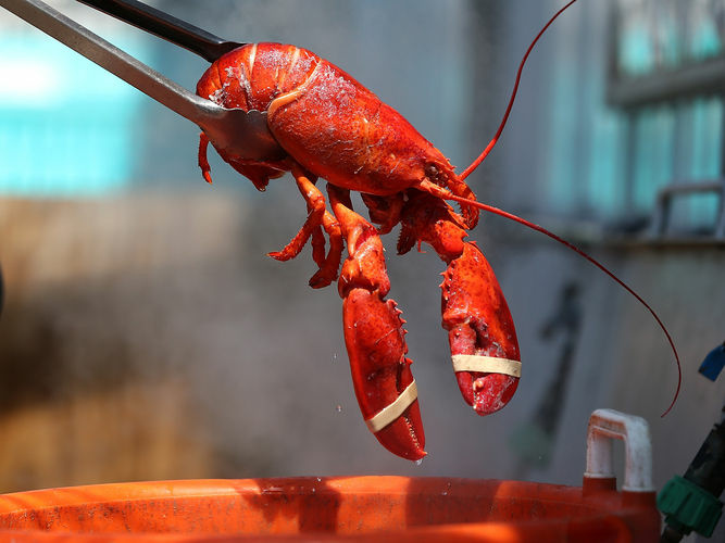The Port of Los Angeles Lobster Fest is happening 9/14-9/16. It was certified in 2009 by Guinness Records as the biggest sea food festival in the world.