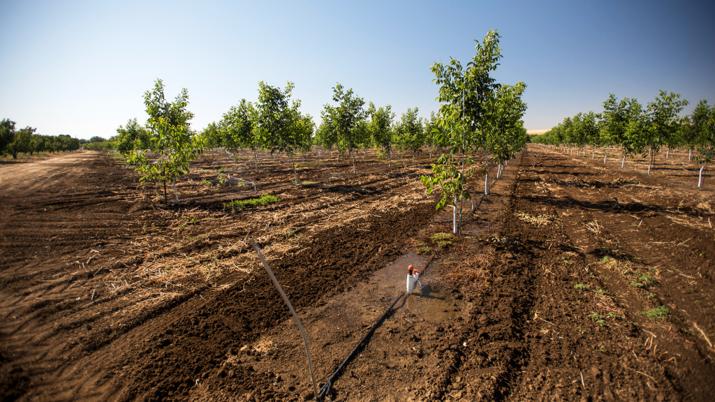Walnut trees at a farm in Byron, Calif. An analysis of nearly 90 studies finds warming temperatures may alter where key crops grow across the state, which provides around two-thirds of America's produce.