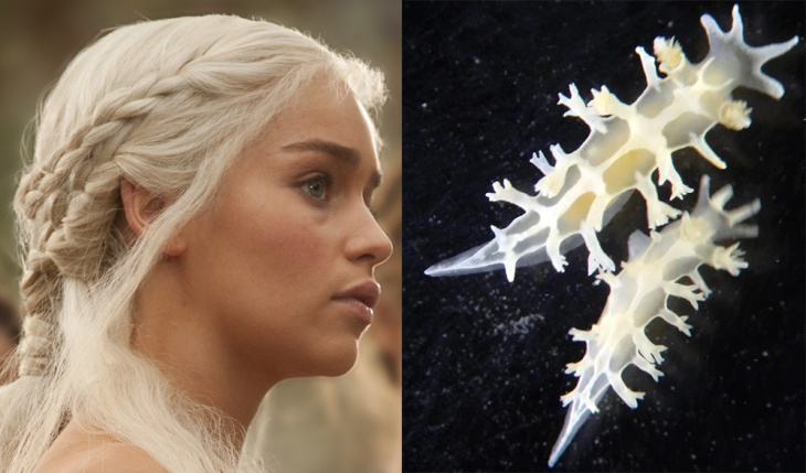 A new species of sea slug discovered in Brazil has been named Tritonia khaleesi, after the character Daenerys Targaryen from