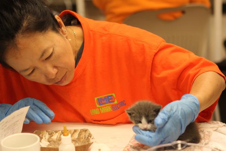 A volunteer hand feeds a kitten at Best Friends Animal Society's kitten nursery in Mission Hills, CA.